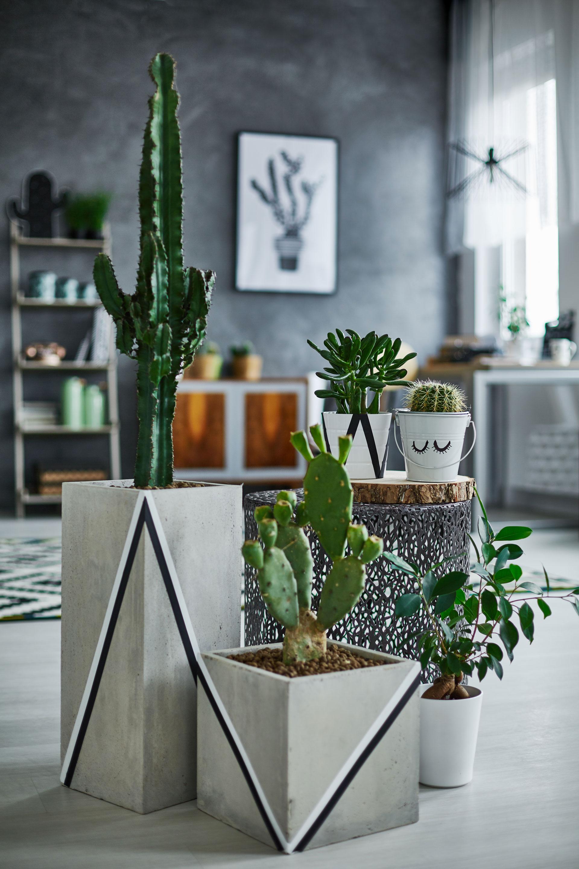 Intérieur green : des plantes élégantes ET dépolluantes